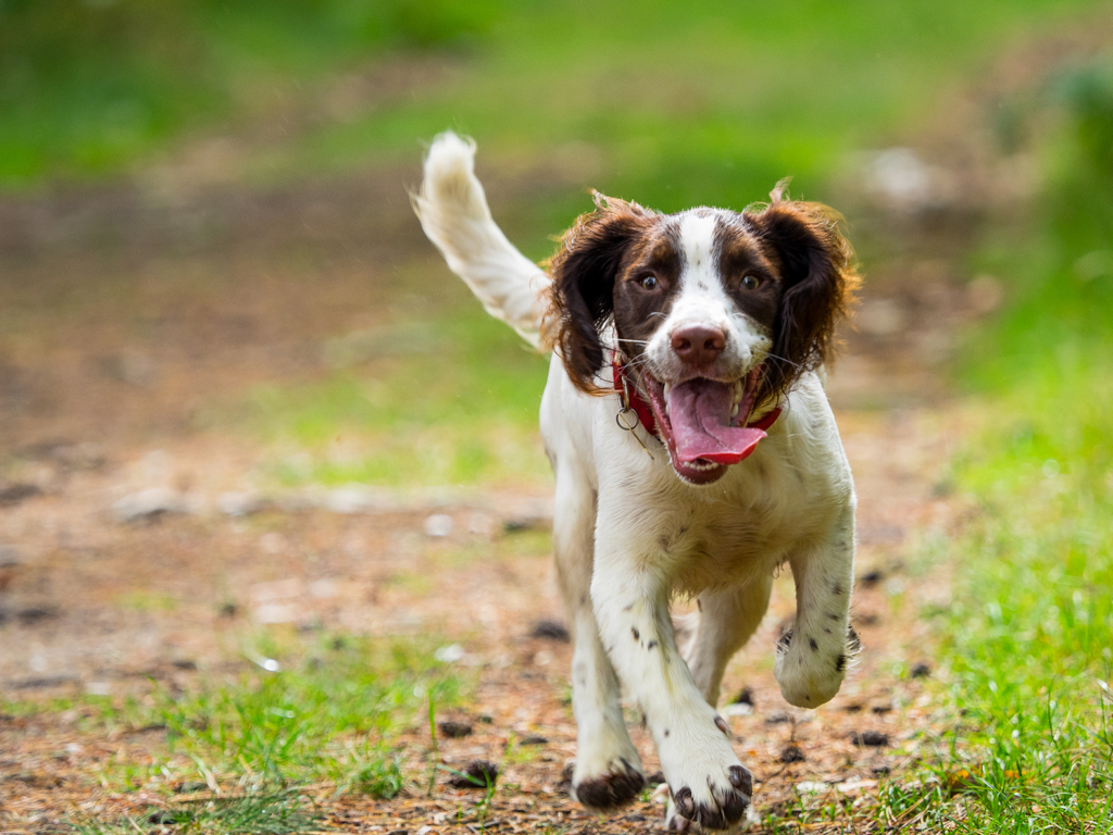 Benefits of walking dog on its own