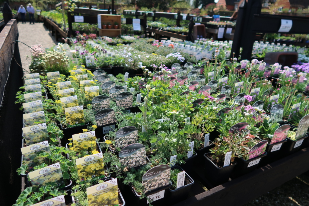 renovate a house garden centre
