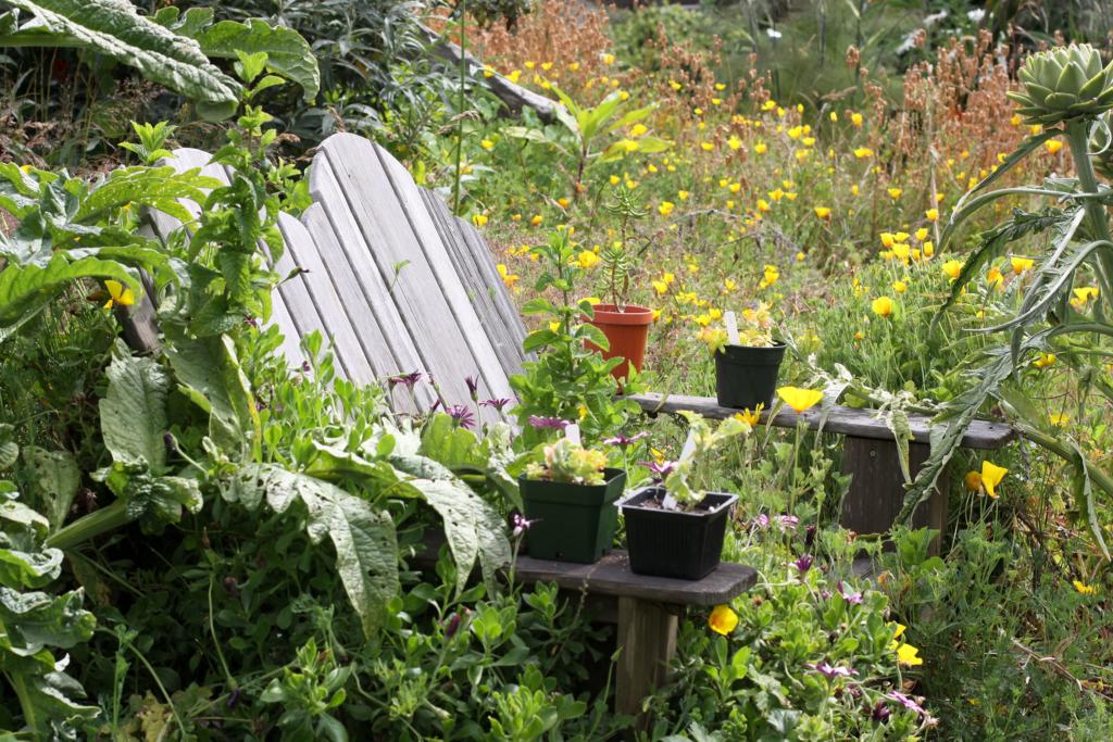renovate a house overgrown garden