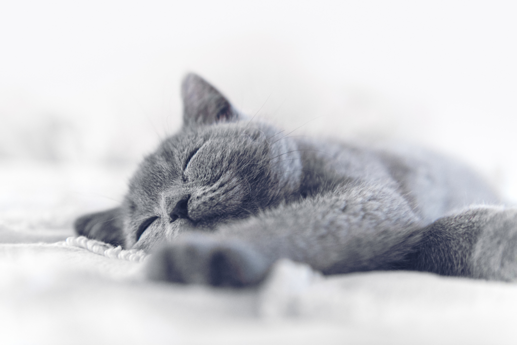 immune system booster guide kitten sleeping well